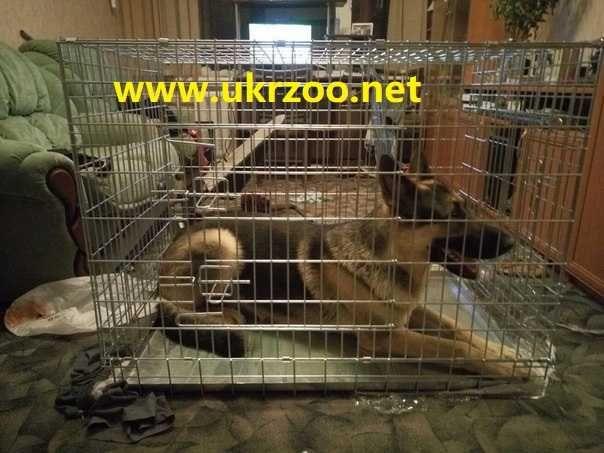 металлический  вольер клетка для собак крупных пород волк 108х72х83 см