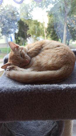 Zaginęła kotka ruda. Obroże znaleziono przy szkole nr 2 w Zgorzelcu