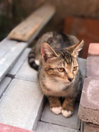 Котенок мальчик Ввсилий