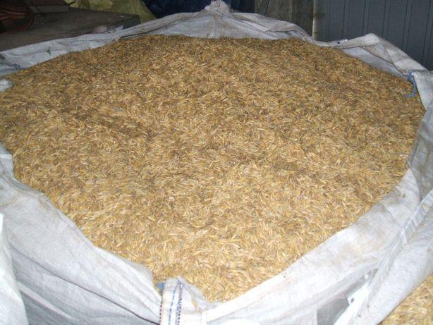 mieszanka : owies, pszenica , jęczmień