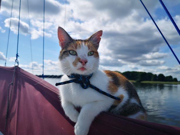 Znaleziono kotkę k. Sztynortu