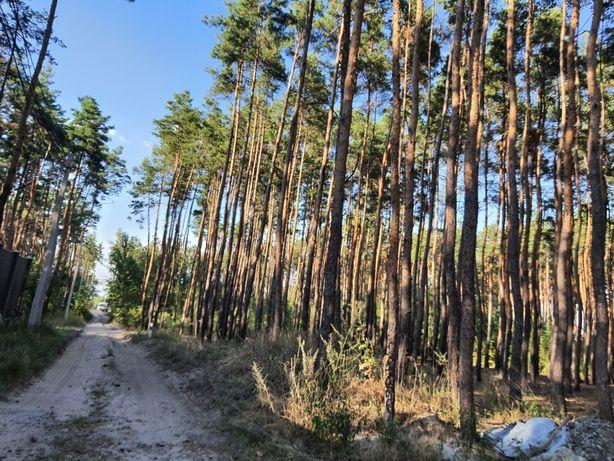 Продам 168 соток в Лесной Бучи