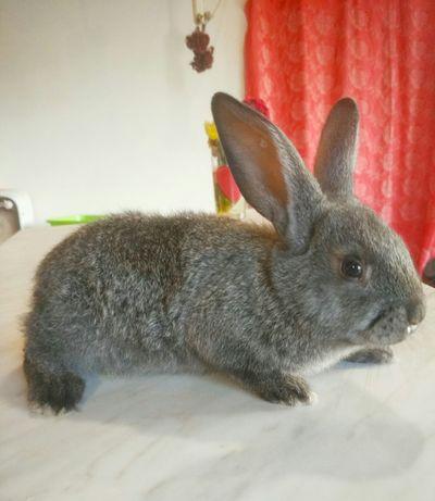 Кролики. Милый крольченок-пушистик!