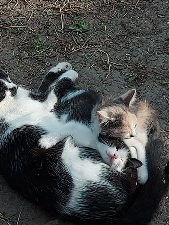 Котики мальчик и девочки