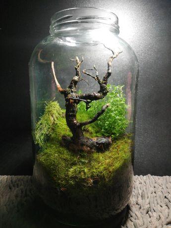 Przenieś do domu lub biura odrobinę lasu i ogrodu.