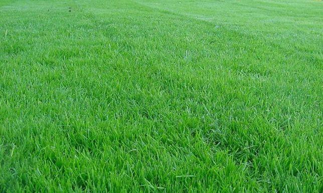Семена газонной травы, ОЗЕЛЕНИТЕЛЯМ, подрядчикам, КРУПНЫЙ ОПТ