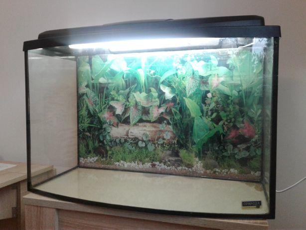 Продам акваріум 95л.