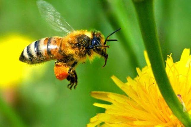 СРОЧНО Продам пчел + Медагонка