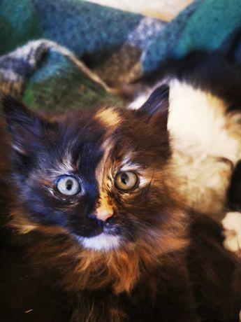 Oddam rozkoszne kociaki, kotki, koty