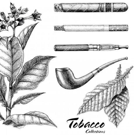Sementes Tabaco Virginia