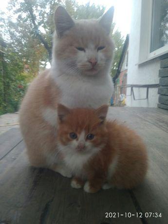 Симпатичный котёнок.