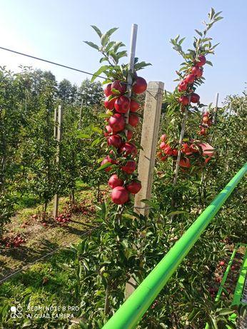 Jabłko ekologiczne