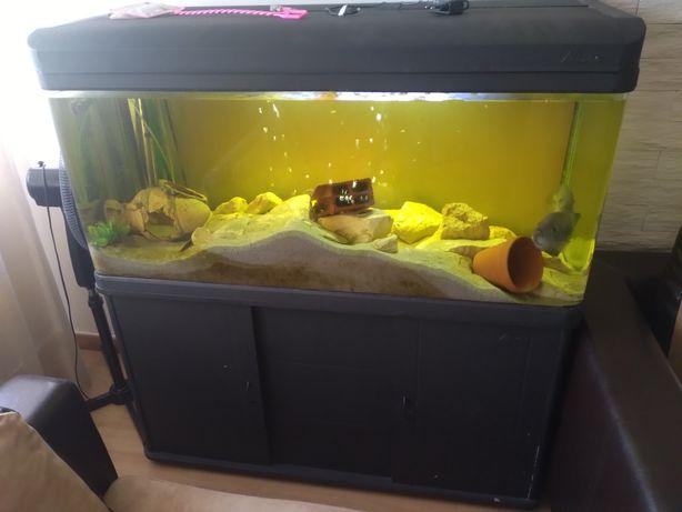 Vendo aquário cantos curvos 1.20m