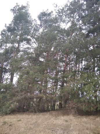 Drzewo/drewno tartaczne i opał
