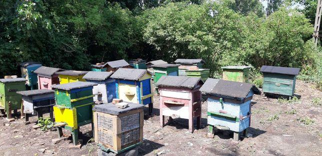 Pszczoły Ule wielkopolskie, ostrowskie transport
