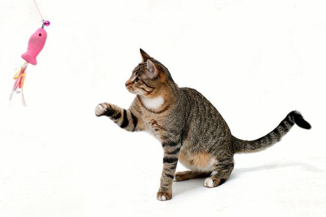 КИЕВ! Котик-подросток до сих пор не нашёл дом