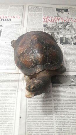 Чучело черепахи из Кубы сушёная черепаха рептилия