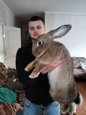 Продам кроликов 2.5 месяца
