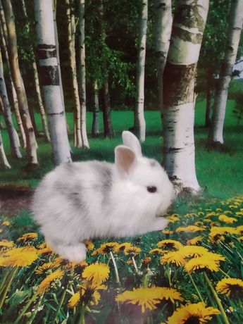 Кролики карлики малютки крольчата и подростки выбор доставка метро