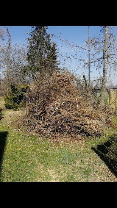 Oddam za darmo gałęzie brzoza, magnolia, bukszpan Pieszyce - image 1