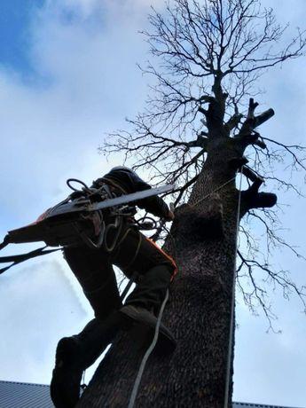 Przycinanie drzew, wycinka drzew, prace alpinistyczne