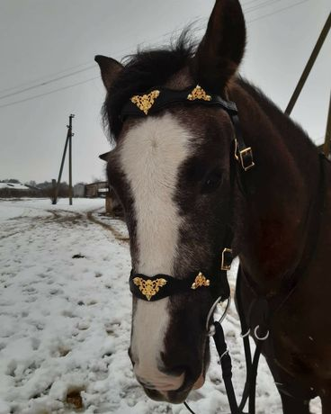 уздечка оголовье для лошади коня амуніція упряж