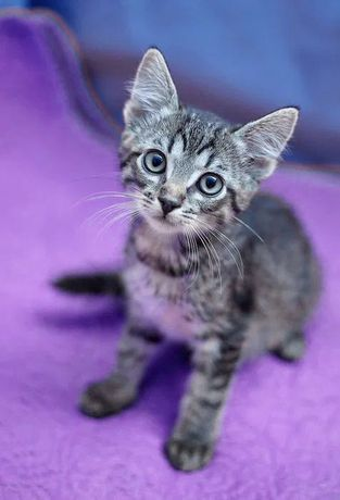 Котик - полосатик Камыш ищет любящую семью - 2 месяца