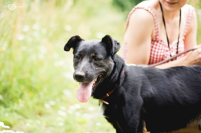 Hugo - skrzywdzony średni czarny pies do adopcji schronisko Kalisz