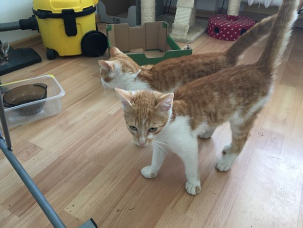 2 bezdomne koty pilnie szukają domów