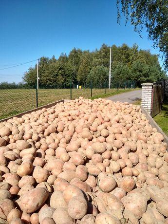 Ziemniaki belarosa czerwone