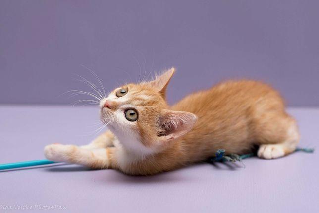 Отдам в хорошие руки очаровательного Берти, котенок мальчик.