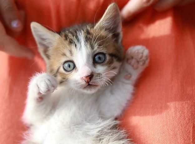 котенок кошка бесплатно