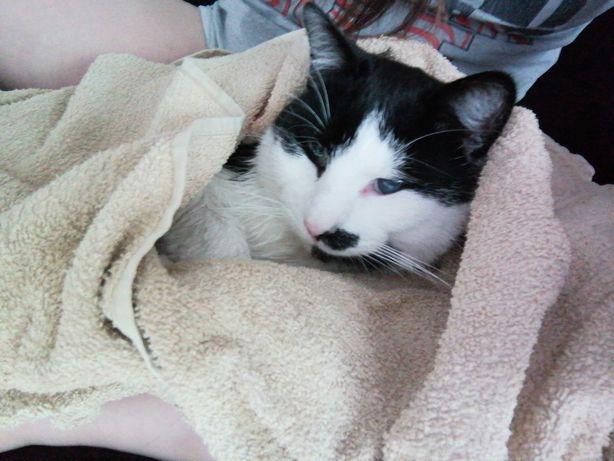 Zaginął kot.Gdansk Morena