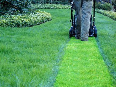 Koszenie trawników, cięcie tui, wycinka. Utrzymanie terenów zielonych!