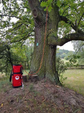 Przycinanie i pielęgnacja drzew, wycinka drzewa, doradztwo ws. drzew