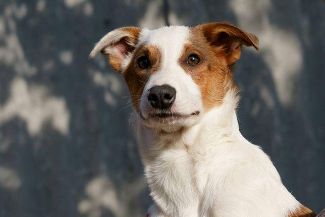 Пёс Бруно, в ответственные руки для охраны и души!