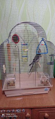 Продаю попугая .