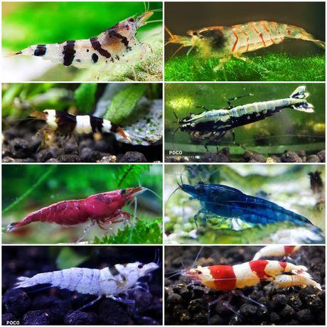 Camarões Caridina/Neocaridina, Lagostins, Peixes, Caracóis e Plantas