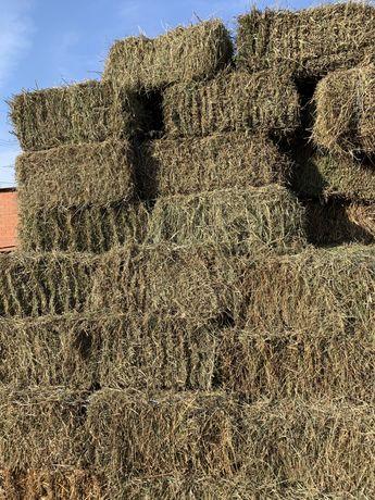 Сено полевое сеяное, разнотравье, сено в тюках