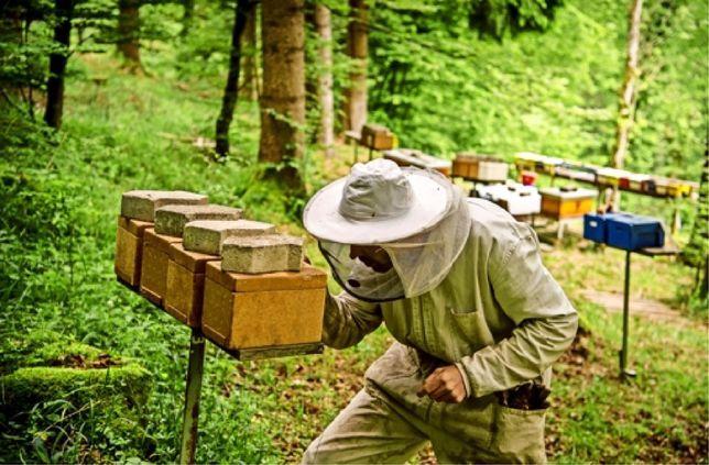 Горный питомник.пчеломатки Карника Sklenar line RL-F-1 4480 NK