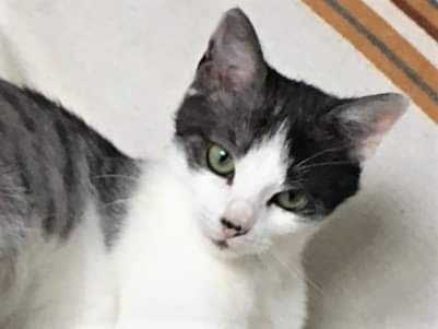 Kotka Lili szuka domu