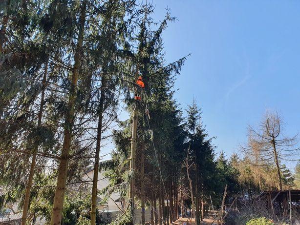 Wycinka drzew, Czyszczenie działek, Usługi ogrodnicze