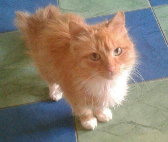 Отдам рыжую кошку,10 месяцев