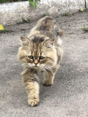 Знайдено кота !!!