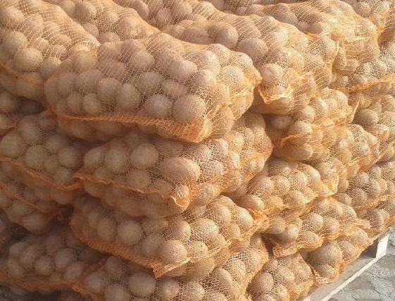 Ziemniaki jadalne Bryza Satnia. Lilly, Denar, Vineta, Bellarosa