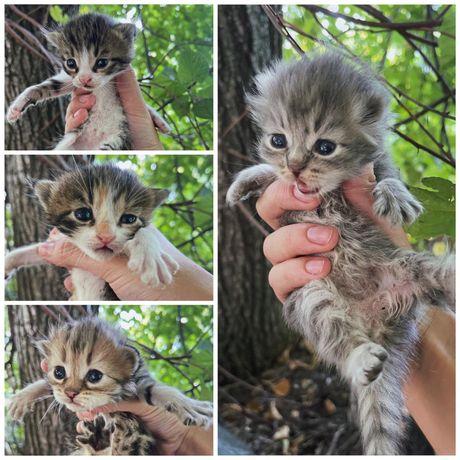Котенок ищет семью , котята, нужен дом