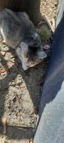 Гарне кошеня з чудесною мордочкою