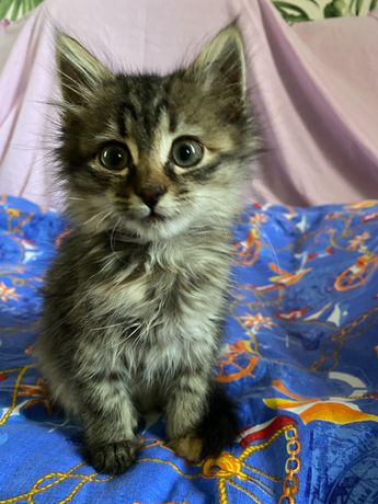 Котёнок (девочка) очень ласковая ,отдам бесплатно