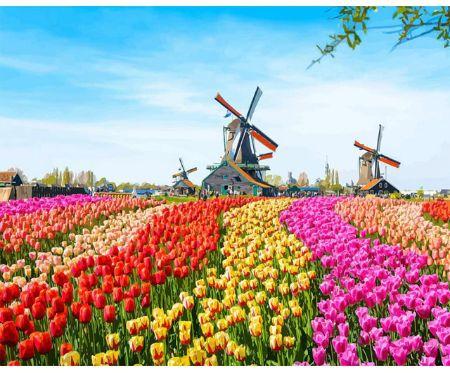 "Namaluj obraz sam - "" Holandia wiatraki tulipany "" maluj po numerach"