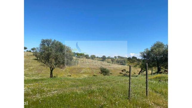 Herdade em Serpa 8 hectares